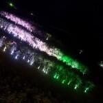 Sheraton Grande Ocean Resort Executivedouble  201408 26