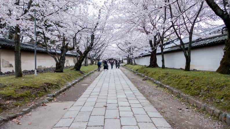 amex kyoto daigoji ivent 201504 1