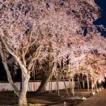 amex kyoto daigoji ivent 201504 15