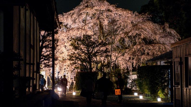 amex kyoto daigoji ivent 201504 20
