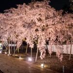 amex kyoto daigoji ivent 201504 21