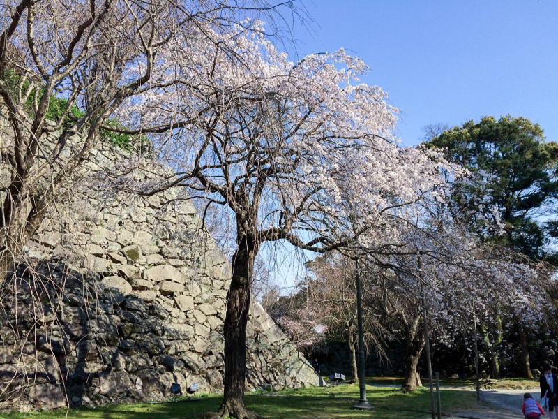 Maizuru Park 201603 5