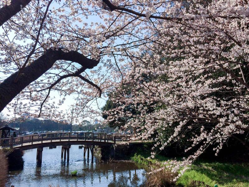 Maizuru Park 201603 2